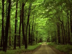 200年の森